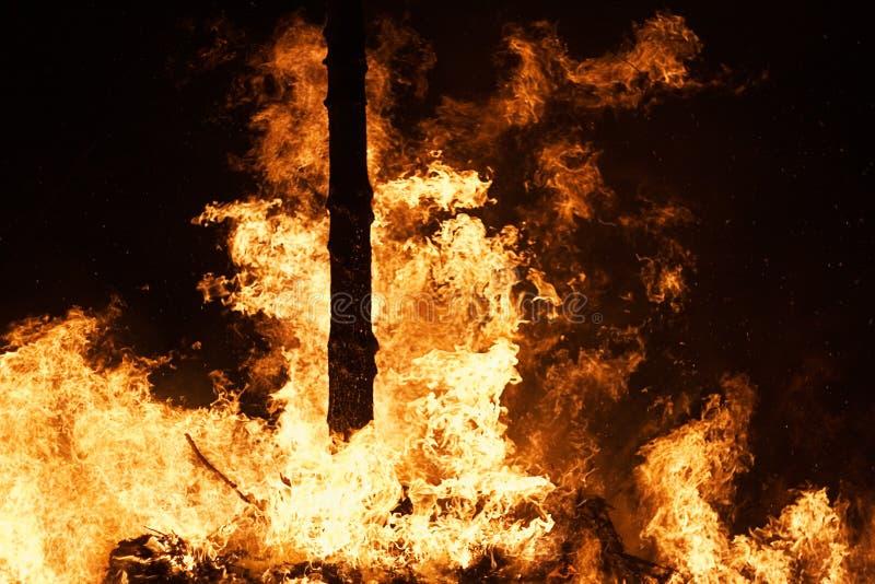 leśny pożarowe raging fotografia stock