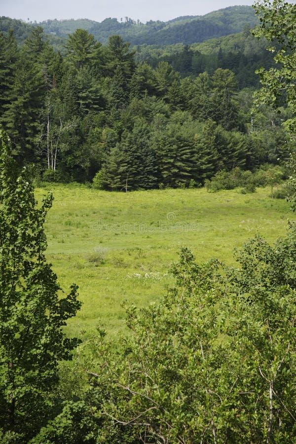 leśny Quebec zdjęcia royalty free