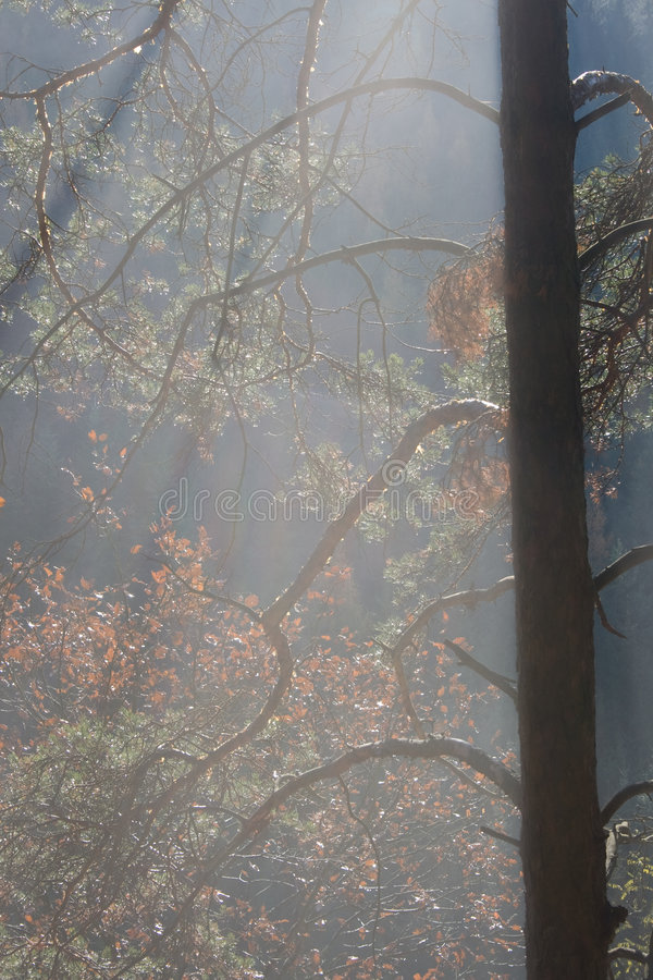 leśny słońce obraz royalty free
