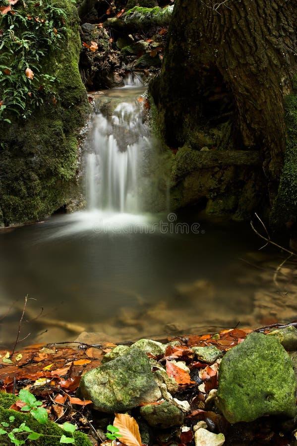 leśny strumienia zdjęcia royalty free