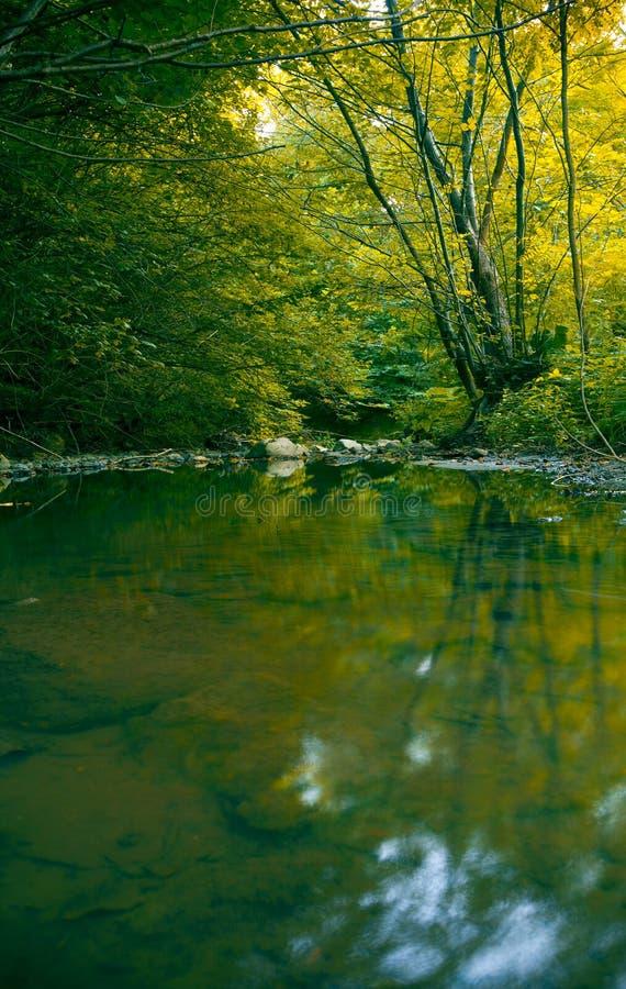 leśny strumienia zdjęcie royalty free