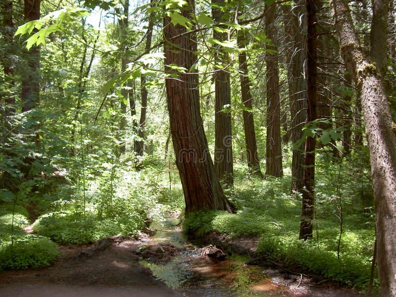 leśny Yosemite zdjęcia royalty free
