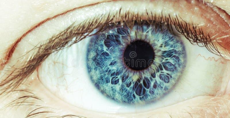 Le œil bleu images libres de droits