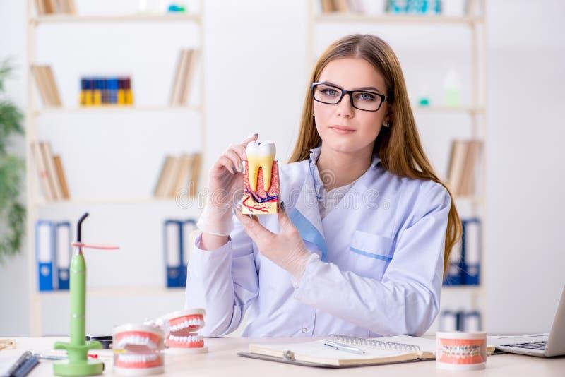 Le abilità di pratica dello studente di odontoiatria in aula fotografie stock libere da diritti