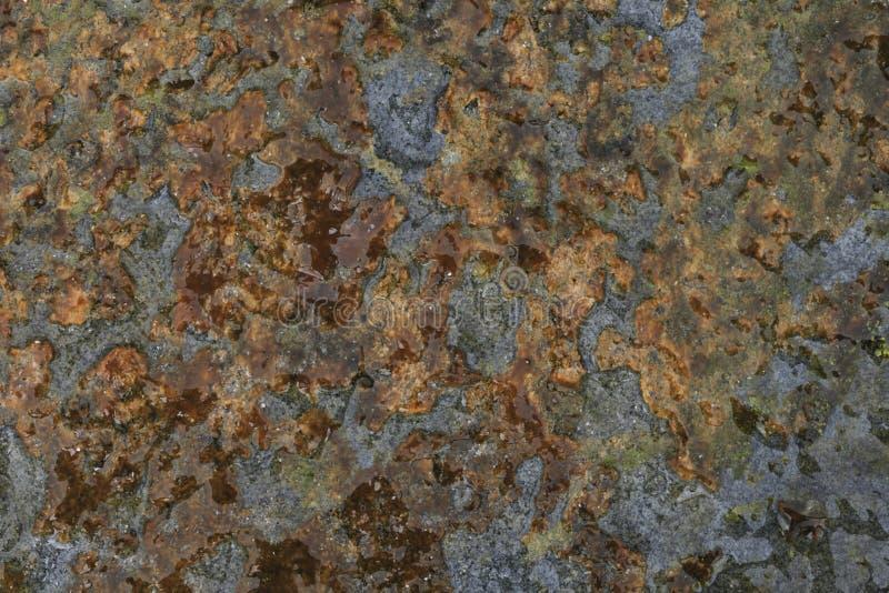 Le alghe hanno coperto la roccia immagine stock libera da diritti