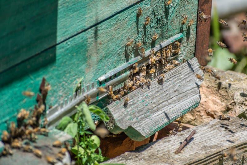 Le api portano il polline in un alveare fotografia stock libera da diritti
