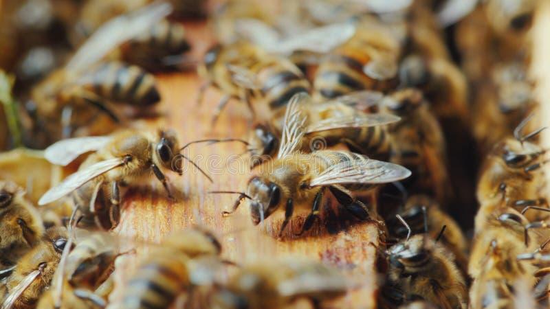 Le api stanno funzionando dentro l'alveare Alimento utile e medicina tradizionale immagine stock libera da diritti