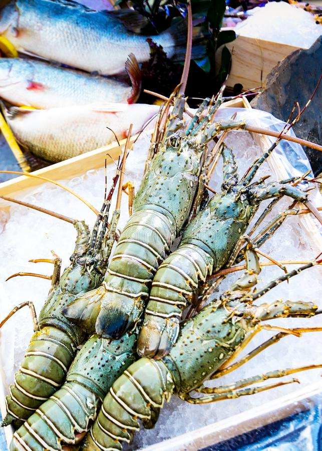 Le aragoste fresche su ghiaccio, l'alimento della via, il mercato dei frutti di mare, aragoste si chiudono su immagine stock libera da diritti