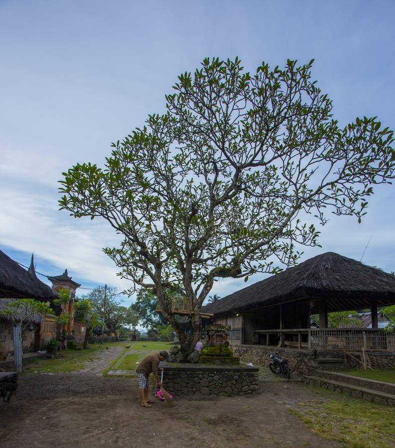 Le attività locali nel villaggio di Tenganan Pegringsingan fotografia stock libera da diritti