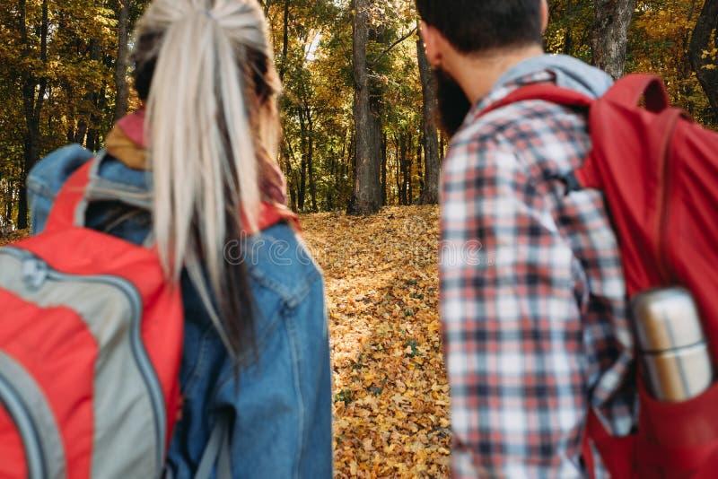 Le avventure di caduta coppia la foresta di autunno degli zainhi immagine stock