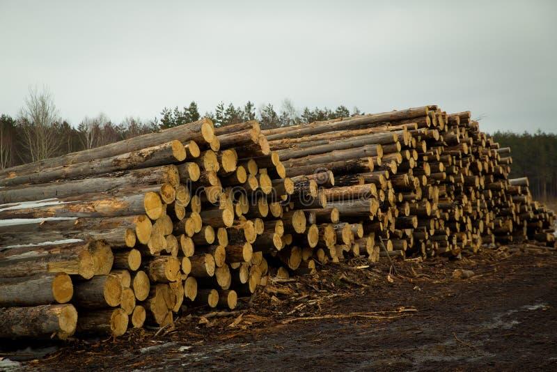 Le azione di collegano il disboscamento industriale della foresta dell'inverno fotografie stock
