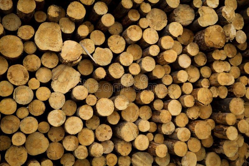 Le azione di collegano il disboscamento industriale della foresta dell'inverno fotografie stock libere da diritti