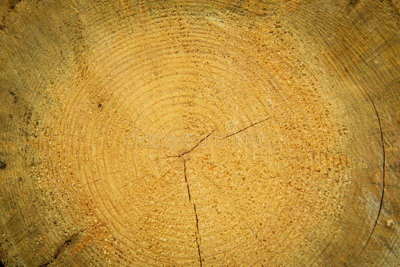 Le azione di collegano il disboscamento industriale della foresta dell'inverno immagine stock libera da diritti