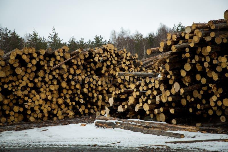 Le azione di collegano il disboscamento industriale della foresta dell'inverno fotografia stock