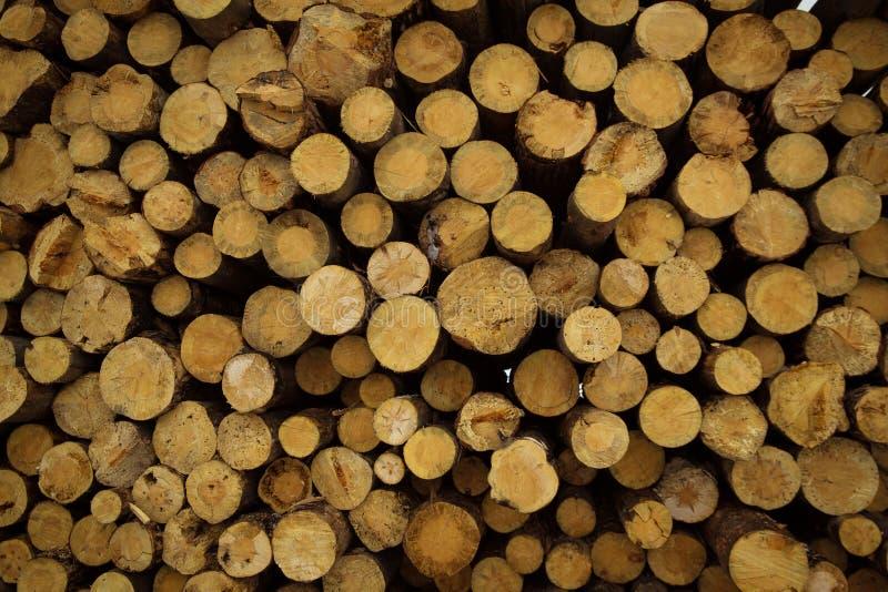 Le azione di collegano il disboscamento industriale della foresta dell'inverno fotografia stock libera da diritti