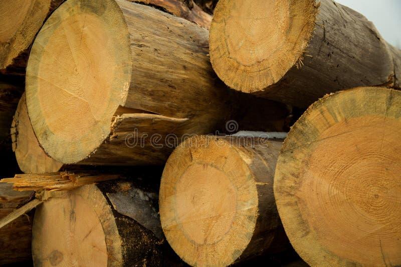 Le azione di collegano il disboscamento industriale della foresta dell'inverno immagine stock