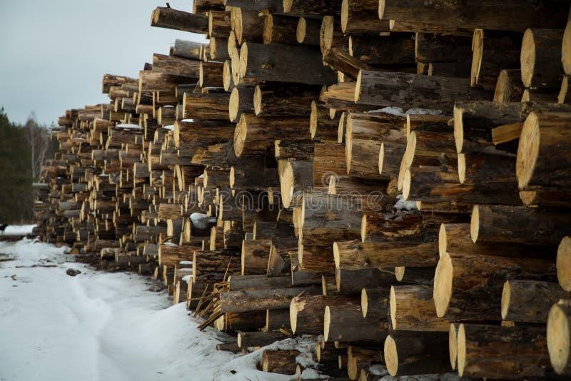 Le azione di collegano il disboscamento industriale della foresta dell'inverno immagini stock