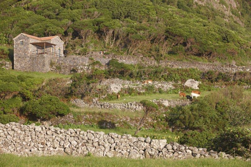 Le Azzorre abbelliscono con la casa di pietra nell'isola del Flores, Azzorre Porta fotografia stock libera da diritti