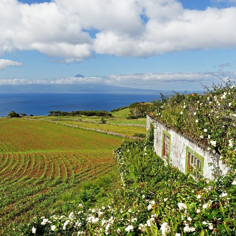 Le Azzorre - Camera con i fiori e la vista dell'isola fotografia stock libera da diritti