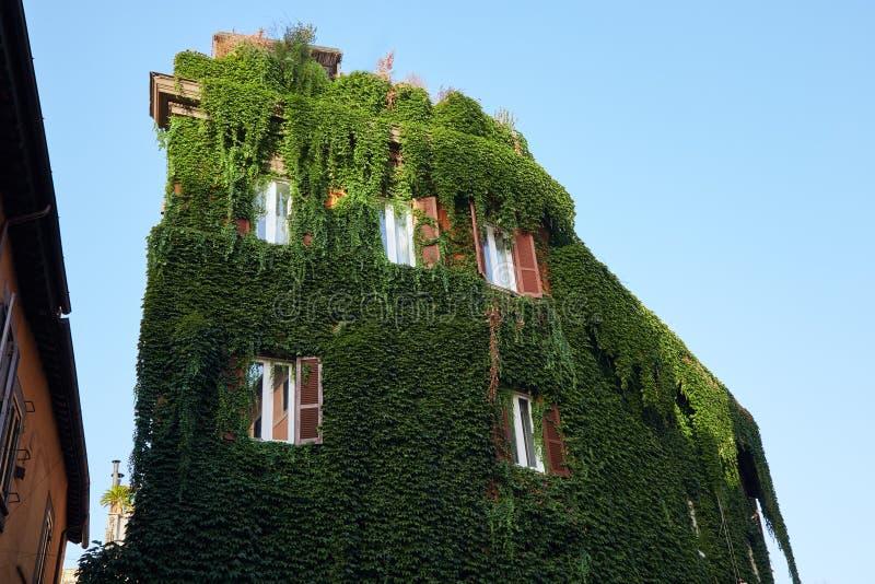 Le bâtiment est envahi avec la vigne légèrement photos libres de droits