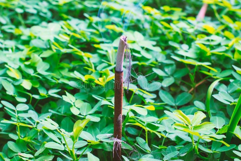 Le bâton d'encens donnant l'odeur douce du frangipani photographie stock libre de droits