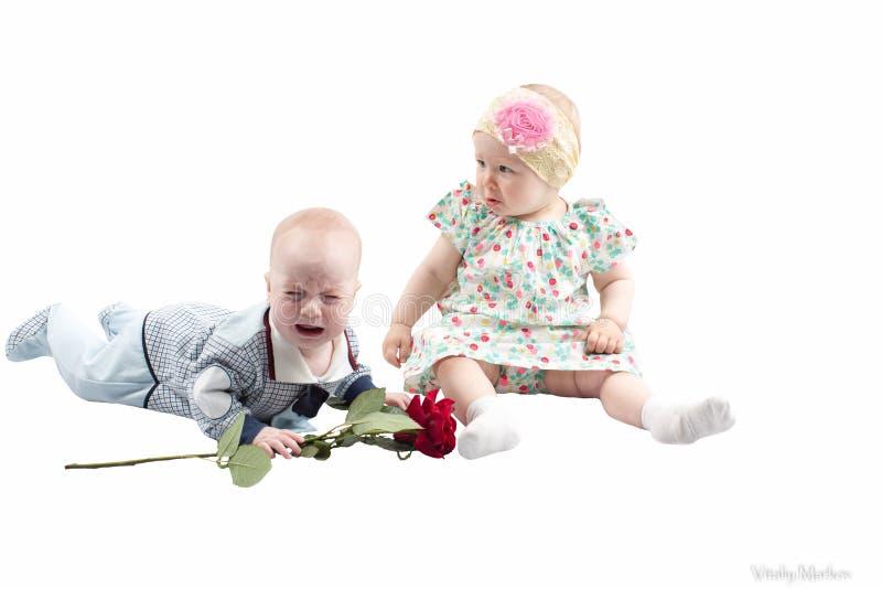 Le bébé garçon présente la fleur de rose de rouge à la fille mignonne d'enfant d'isolement sur le fond blanc. images libres de droits