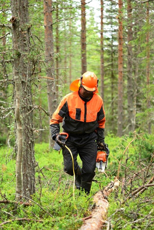 Le bûcheron coupe la tronçonneuse d'arbre de coupe de branches photos libres de droits