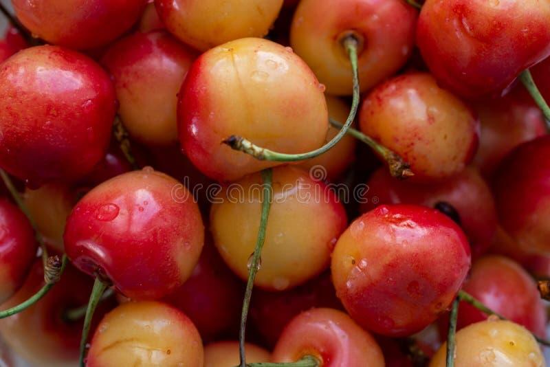 Le bacche dentellano le ciliege con le code primo piano, fondo fotografia stock libera da diritti