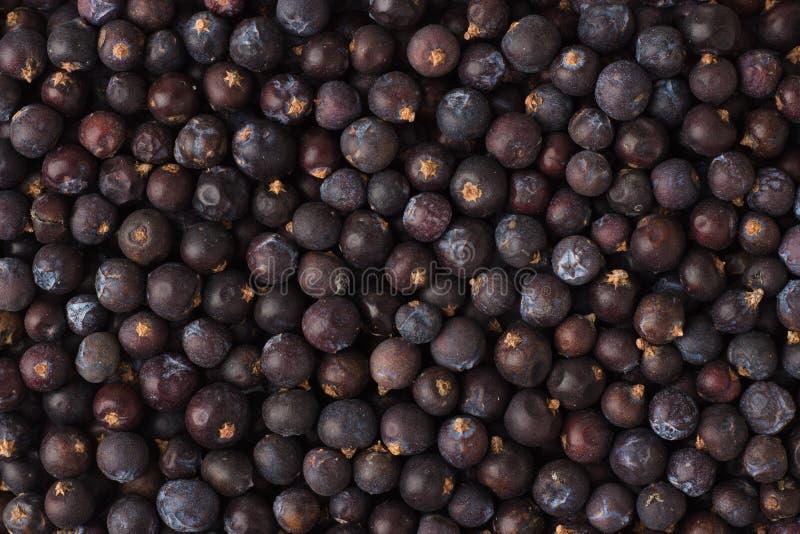 Le bacche di ginepro secche aromatizzano come fondo, t di condimento naturale fotografia stock libera da diritti