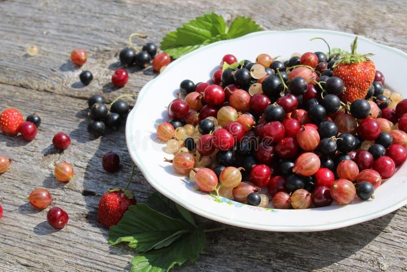 Le bacche fresche di bianco, nero, ribes, ciliegia, bacche di uva e fragole sono sul piatto e sparse intorno fotografia stock