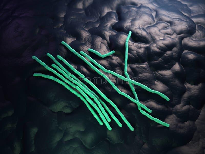 Le bacillus céreus - fin  illustration stock