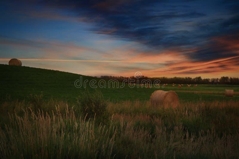 Le balle rotonde di fieno in agricoltori sistemano nell'ambito di bello tramonto fotografia stock