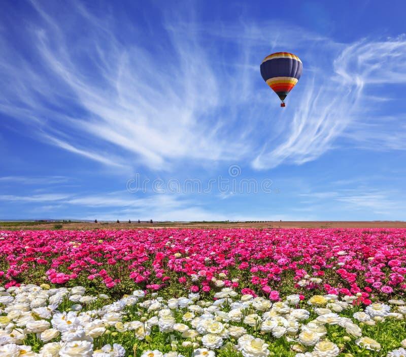 Le ballon vole au-dessus d'un champ images libres de droits