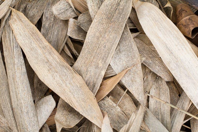 Le bambou brun sec part sur le fond de texture de plancher images stock