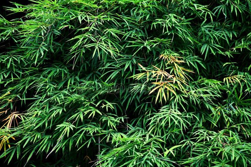 Le bambou est fond image libre de droits