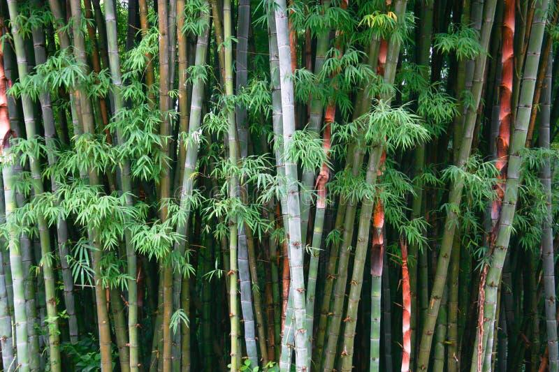 Le bambou est fond images libres de droits