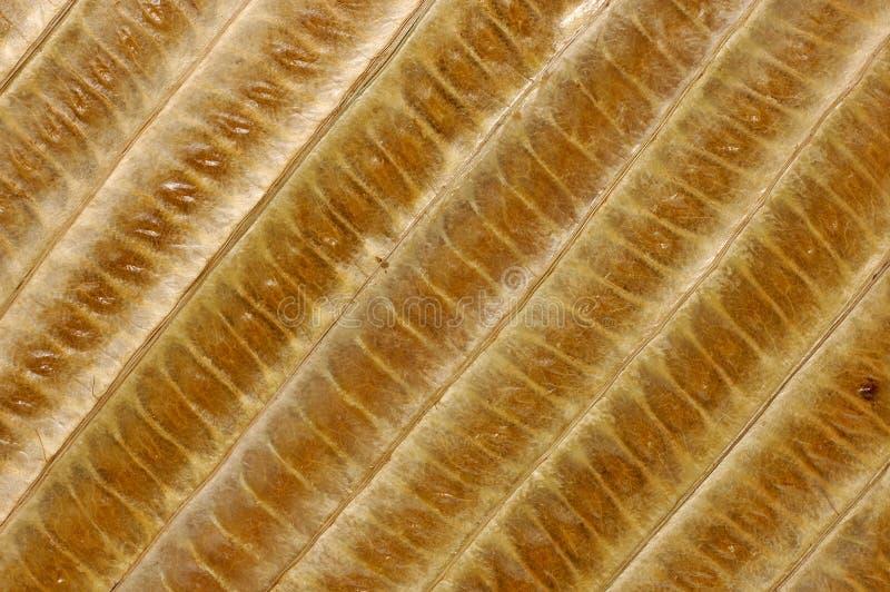 Le bambou part du fond image stock