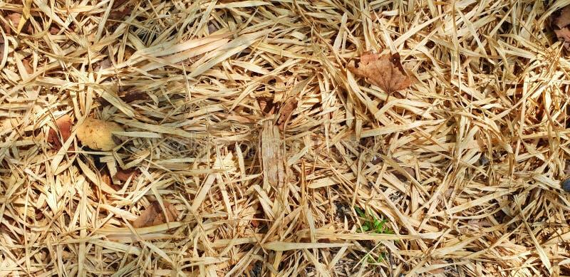 Le bambou sec comme fond, sèchent des feuilles au sol avec la lumière du soleil dans la forêt images libres de droits