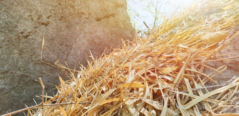Le bambou sec comme fond, sèchent des feuilles au sol avec la lumière du soleil dans la forêt image libre de droits