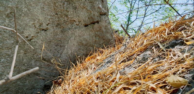 Le bambou sec comme fond, sèchent des feuilles au sol avec la lumière du soleil dans la forêt image stock