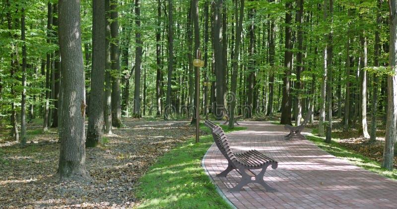 Le banc en bois vide à l'allée de parc, buissons ensoleillés et verts sont derrière le banc, feuilles sèches de jaune au sol, bal photo libre de droits
