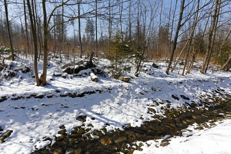 Le banche del ruscello sono coperte di neve fotografia stock libera da diritti