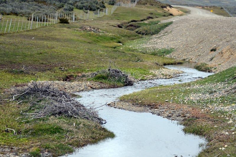 Le barrage, érigé par des branches de castors des buissons, dans la partie déboisée de Tierra del Fuego image stock