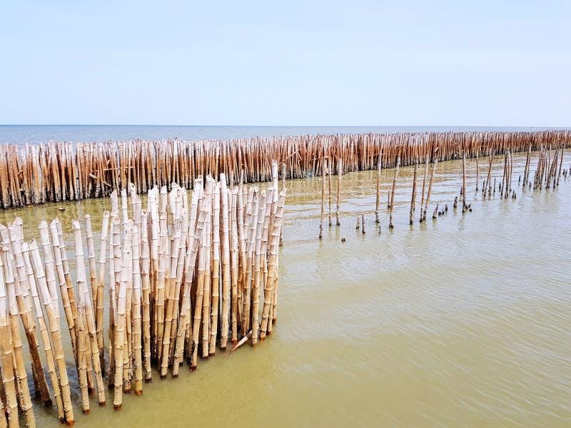 Le barrage en bambou fait l'humain et en protégeant la grande vague contre la mer ou l'océan et le ciel bleu avec l'espace de cop photos libres de droits