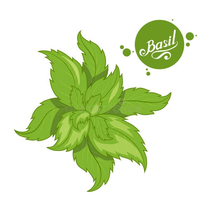 Le basilic tiré par la main part, ingrédient épicé, logo vert de basilic, aliment biologique sain, basilic d'épice d'isolement su illustration libre de droits