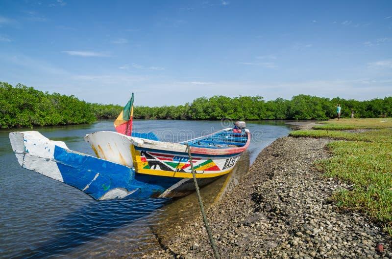 Le bateau ou le pirouge en bois coloré a amarré dans la forêt de palétuvier de delta de Saloum de sinus, Sénégal, Afrique photographie stock libre de droits