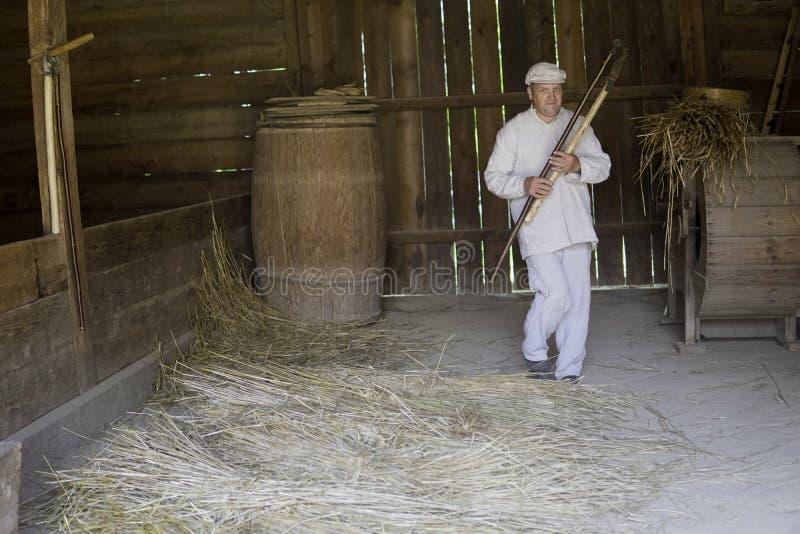 Le battage avec un fléau en bois par un homme a habillé le blanc photo libre de droits