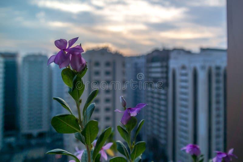 Le beau balcon fleurit la vue dans la ville d'une haute tour photographie stock libre de droits