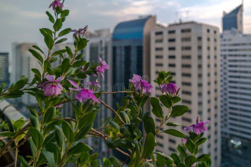 Le beau balcon fleurit la vue dans la ville d'une haute tour images libres de droits