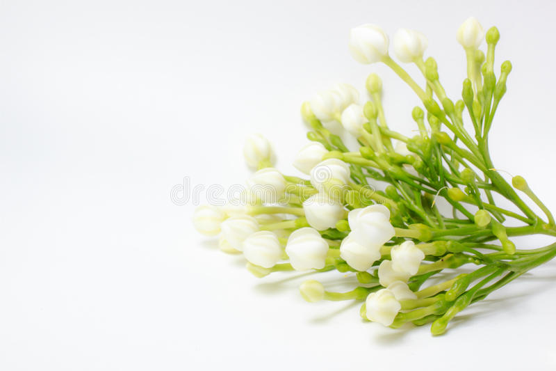 Le beau bouquet des jasminoides de bourgeonnement blancs de gardénia fleurissent photo stock